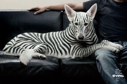 VIPAL Environmental Awareness: Zebra