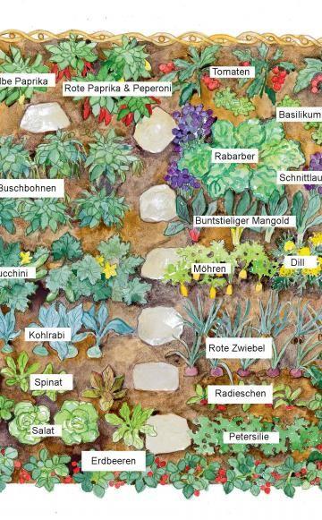 Pflanzplan für eine gute Mischkultur im Küchengart