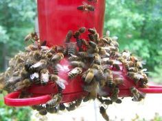 Keeping Bees Away from a Hummingbird Feeder.    Note: The nectar recipe on this page is incorrect. The right ratio is 4 parts water to 1 part sugar.  4 cups of water with 1 cup of sugar.