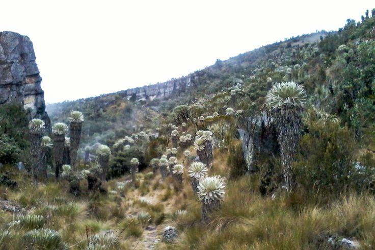 There's no translation of páramo, since it's a landscape and ecosystem that only exists in Colombia and its neighboring countries. This particular tropical alpine landscape begins at 3000 meters ab...