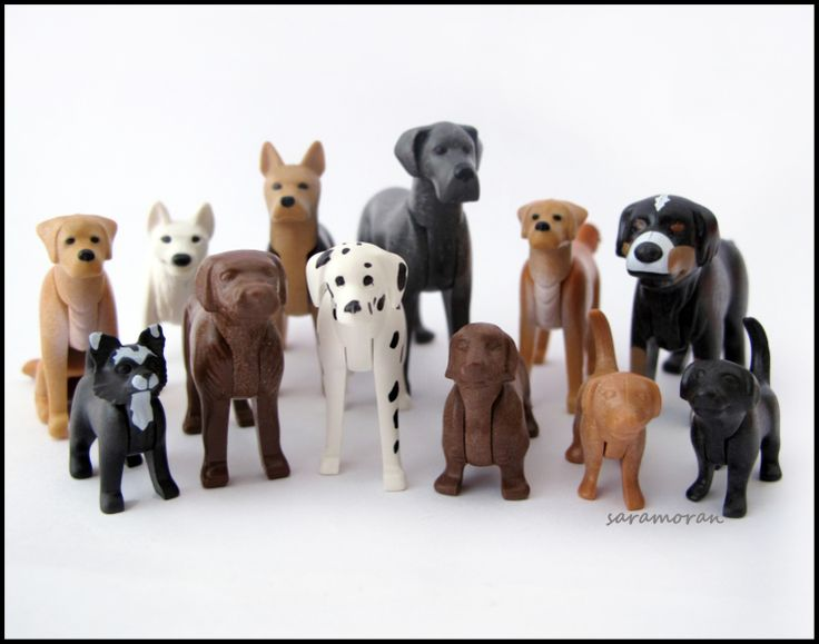 Dogs & Friends
