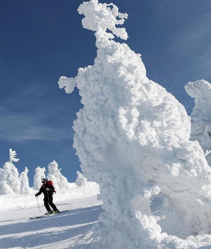 蔵王温泉スキー場で見頃を迎えた樹氷。大きく育ったアイスモンスターの脇をスキーヤーが滑り抜けた=1日、山形市 / 「白い怪物」群れ成す 山形・蔵王、樹氷が見頃 / 産経フォト #蔵王温泉 #ゲレンデ
