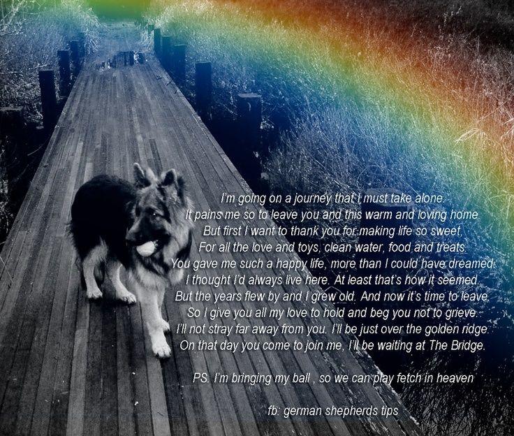 GERMAN SHEPHERD RAINBOW BRIDGE - Google Search   Amazing ...