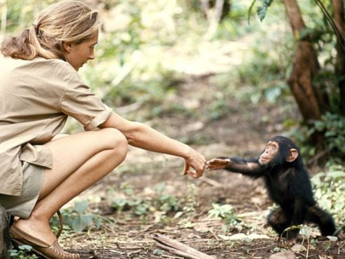 Jane Goodall is known as one of the most prominent anthropologists of our time. And yes, the monkey is cute too :)