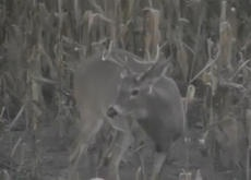 Big Buck Deer!!!  =-)