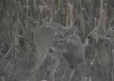 Big Buck Deer!!!  =-): Whitetail Deer, Deer Trophy, Bucks Deer, 2010 Archery, Trophy Bucks, Big Bucks, Hunt'S Videos, Archery Hunt'S