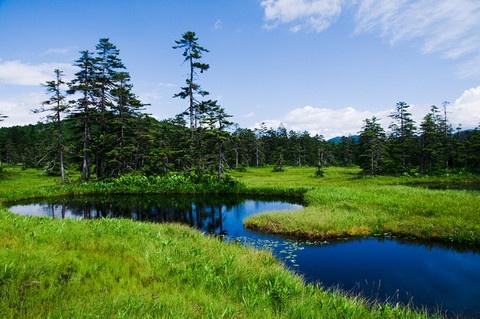 Ukishima marsh 浮島湿原