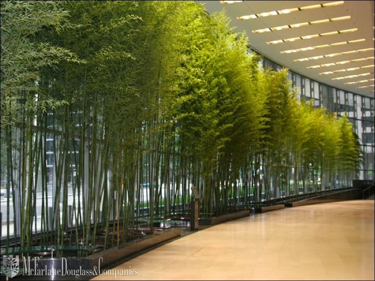 A #bamboo Lined #hallway Totally Transforms A Space! #plants #landscaping