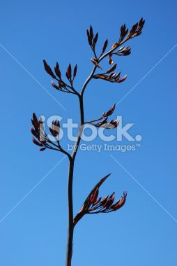 New Zealand Flax Flower Royalty Free Stock Photo