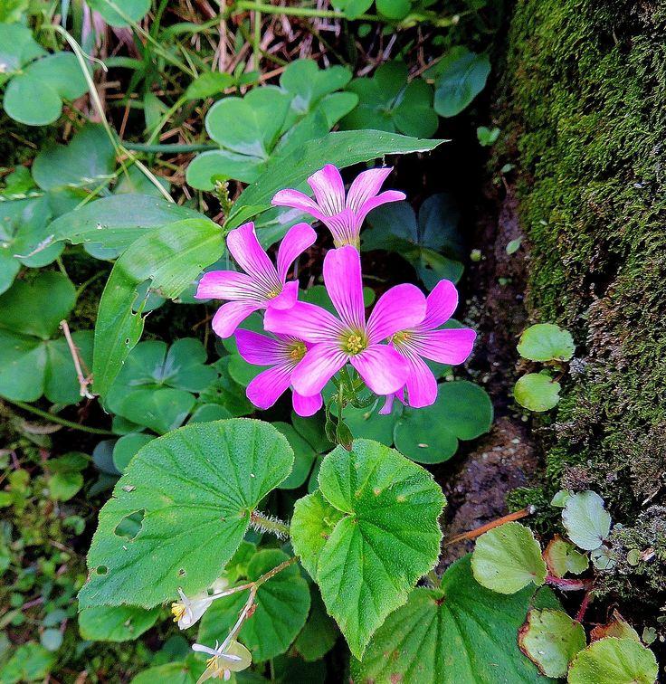 Teeny Tiny Flower