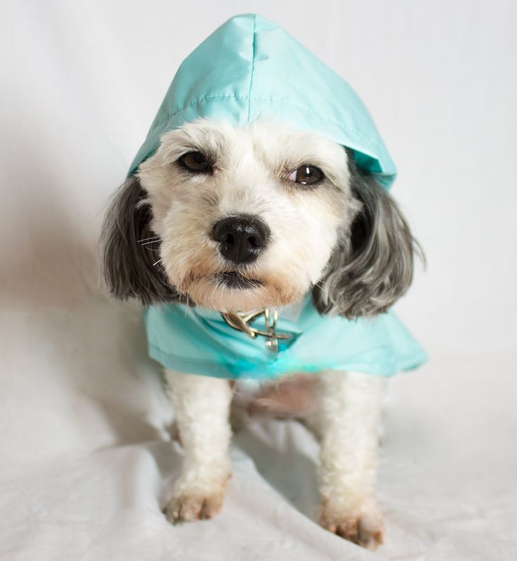 Even dogs love our Roo Rain Gear water proof ponchos. Made from recycled plastic bottles. RPET. Cute Dog Clothes