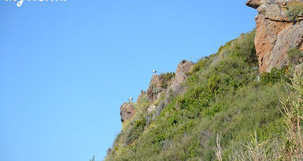 Trekking in Ischia