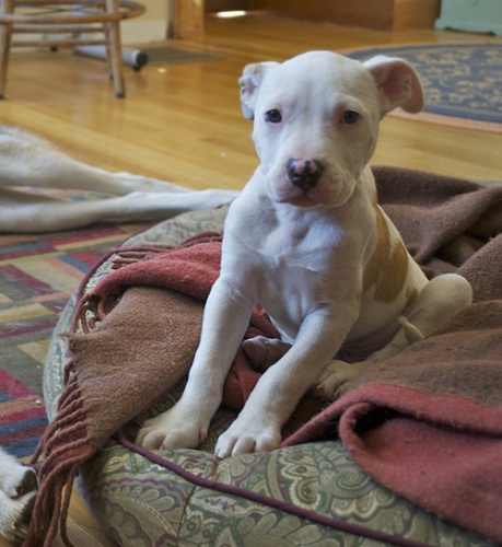 Check out this adorable shelter pet!: Dogs, Adorable Creatures, Adorable Shelters, Wonder Pet, Shelters Pet, Adorable Pets, Pet Projects