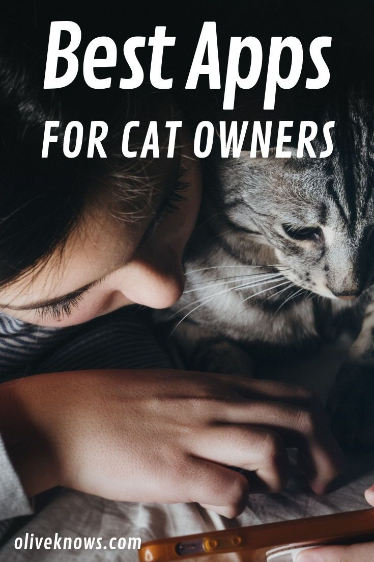 Relax And Spend Time With Your Cat Here Are Some Of Our Favorite