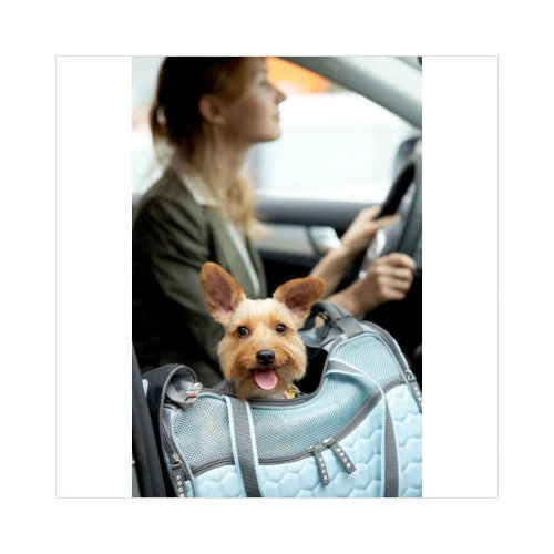 Teafco Argo Petagon Medium Airline Approved Pet Carrier in Maldives Blue  $62.00 in blue