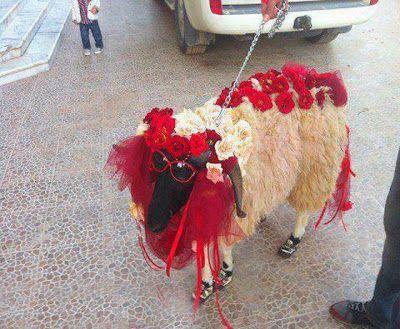 Lamb Dress Funny Picture, Lamb Wedding Dress Funny Picture, Lamb Wearing Dress Joke, Lamb Wedding Dress Joke, Lamb Funny Joke, Animals Jokes, Lamb Wearing Glasses Joke, Lamb Funny Picture