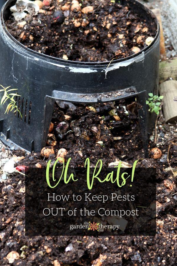 4b6da97310039f957a4293954ec7a455 - How To Get Rid Of Mice In Compost Bin