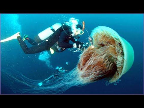 Robotic jellyfish exterminator can clean out 900 kilograms of jellies in...