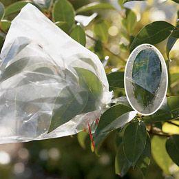"""Experimento científico sencillo que muestra cómo los árboles """"respirar""""::..*•#~~$??*"""
