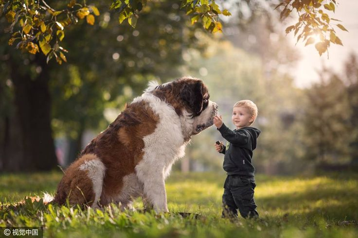 Büyük Köpekler ve Küçük Bebekler - http://www.cizli.com/buyuk-kopekler-ve-kucuk-bebekler/