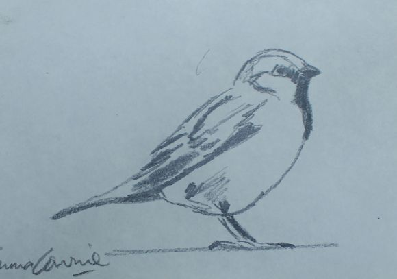 Sparrow #2 Drawing