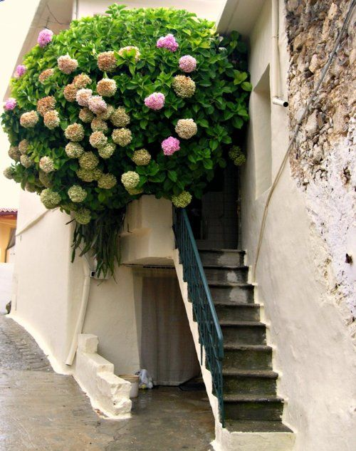 "elladaa: ""A beautiful bouquet on the balcony-Harkia, Rethymno""photo by TBoH      "" A beautiful bouquet on the balcony ~ Harkia, Rethymno ""    photo by TBoH"