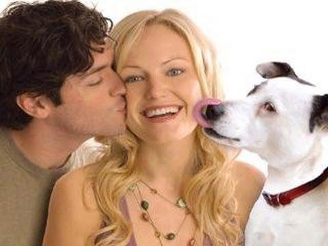 A kutyakomédia 2007 (teljes film) - YouTube