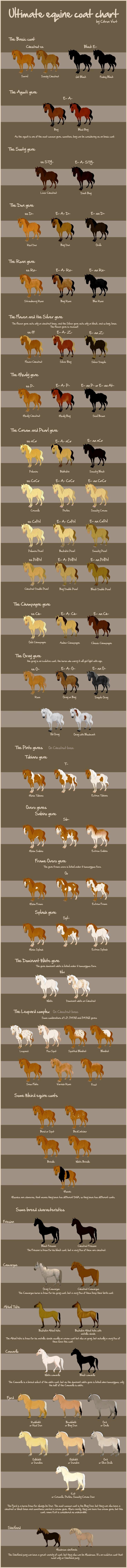 www.pegasebuzz.com   Les robes du cheval en anglais