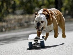 Perro en monopatín