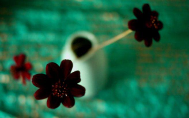 Τα σπανιότερα λουλούδια του πλανήτη