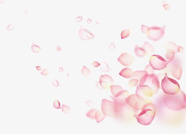 البتلة نبات الوردات بتلات الأحمر البتلات Petal