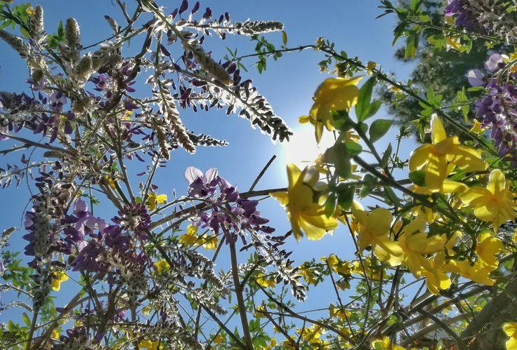 Mezcla de colores, en primavera