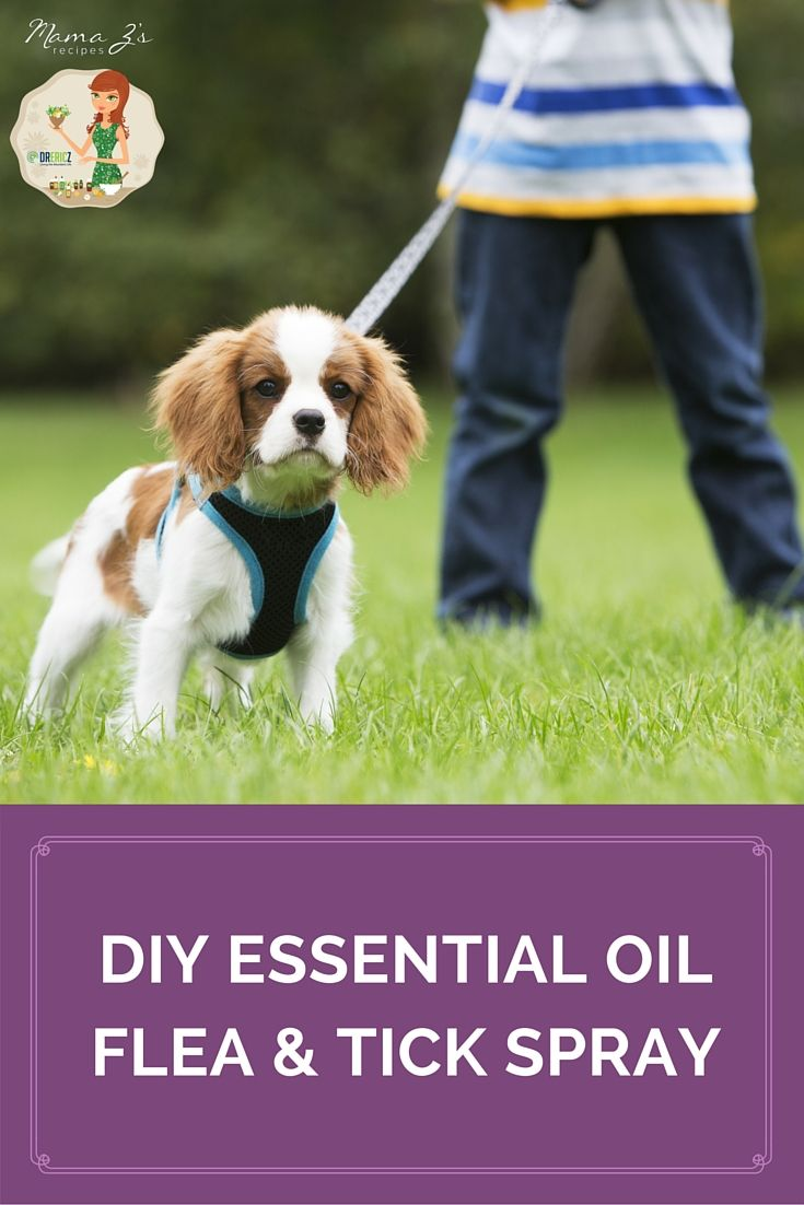 Protect yourself, your family, and your pets from fleas and ticks with this all natural DIY spray.