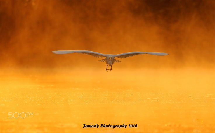 Flying in the Gold - Open in Full View Hope You Will Like