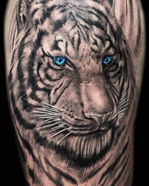 Blue-eyed Tiger / Tigre de Ojos Azules  #tiger #tigertattoo #blackandgrey #blackandgreytattoo #blueeyes #tattoo #art #tatuajes #weslytattoos #arte #tattoolife #costarica #puravida #tatuaje #tattoos #ink #inked #tattooart #inkstagram #bodyart #costaricatattoo #fusionink #inkeeze #fkirons