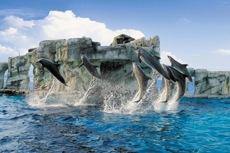 Riccione. I delfini di Oltremare. The dolphins