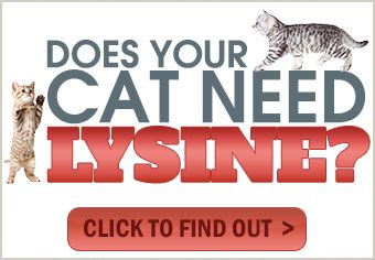 Does Your Cat Need Lysine? L-Lysine is an important dietary supplement for cats because not only does it treat feline herpes but it also helps to prevent the symptoms. Click here to find out more about #cat-lysine