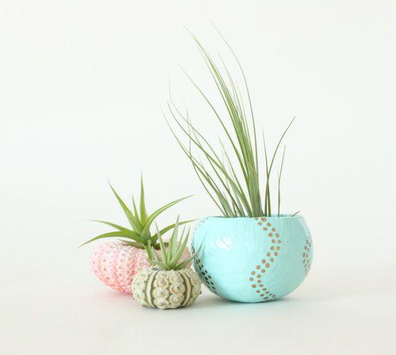 17 meilleures id es propos de plantes a riennes sur pinterest accrocher les plantes d 39 air. Black Bedroom Furniture Sets. Home Design Ideas
