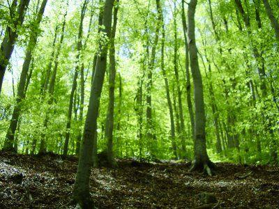 Bosque templado. Lo podemos ubicar en América del norte. Algunos de los problemas ambientales que pueden afectarlo son: Deforestación, eroción del suelo.