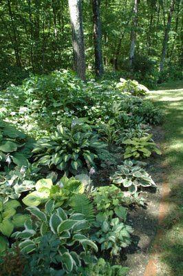 Variegated hosta & fern shade garden