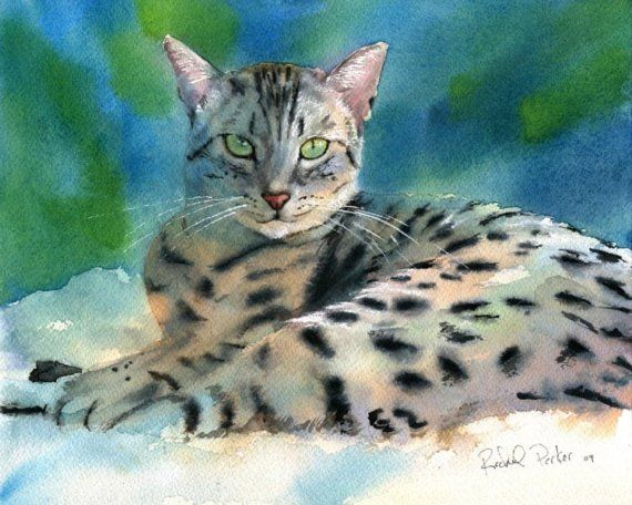 Mau Bengal - watercolor by ©Rachel Parker (RachelsStudio)