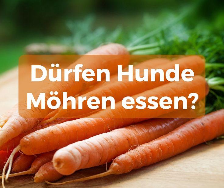 Hunde dürfen Möhren essen. Karotten sind roh, gekocht, getrocknet als Pellets sehr gesund. Möhrensuppe hilft bei Durchfall und Karotten wirken gegen Würmer.