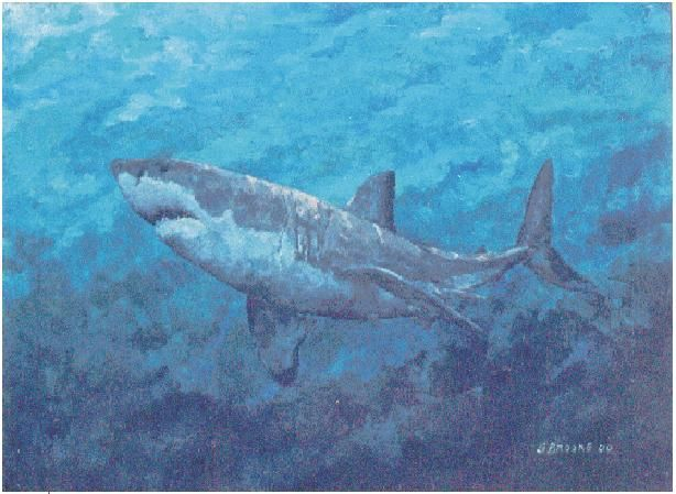 Great White - painting by Stephen Brooke (in private collection)