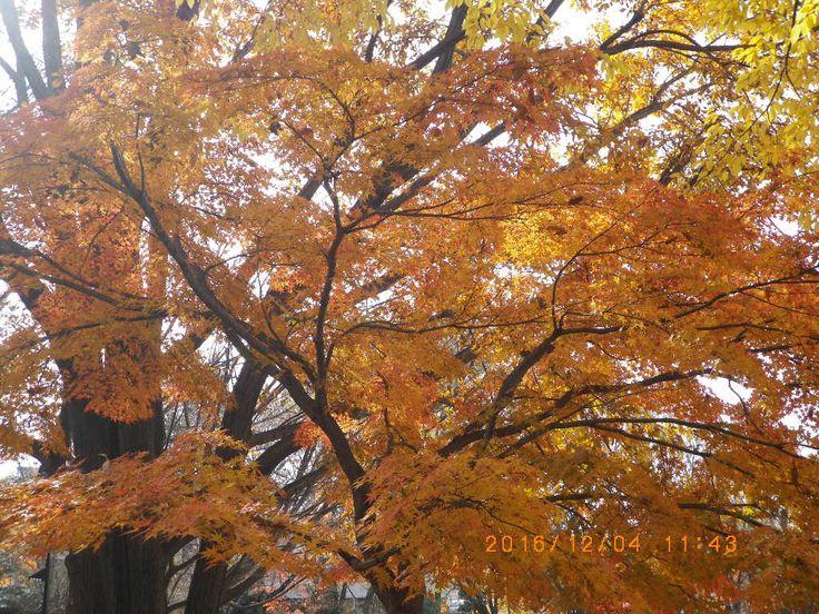 Nature is so beautiful,speechless. #my photo #Nature is beautiful #maple