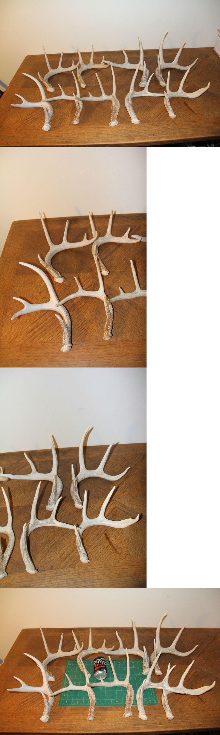 Large Animals 177908: 9 Beautiful Light Color Whitetail Deer Shed Antlers Sheds / Antler Mule Lot 121 BUY IT NOW ONLY: $165.0
