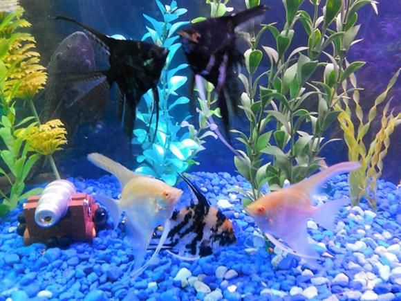 Finding A Townsville Fish Aquarium Store To Look After Your .