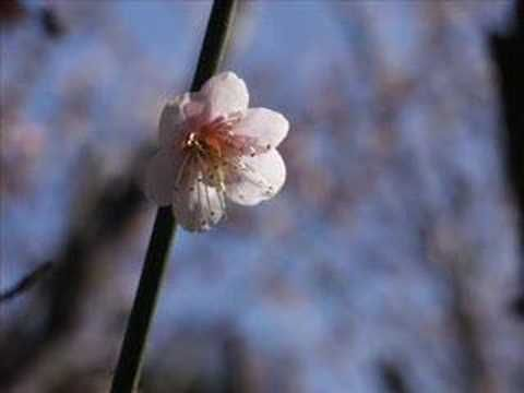 Yuki Kajiura: Grandpa's Violin - exquisite :)