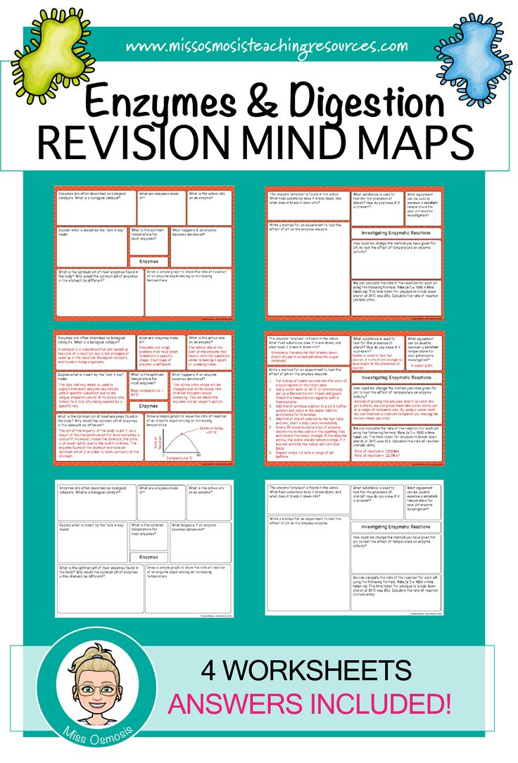Enzymes & Digestion Revision Worksheets in 2020 (With
