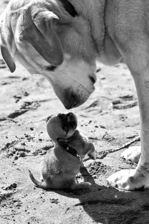 toooo cuteFriends, Little Puppies, Small Dogs, Pets, Bigdogs, Big Little, Little Dogs, Big Dogs, Animal
