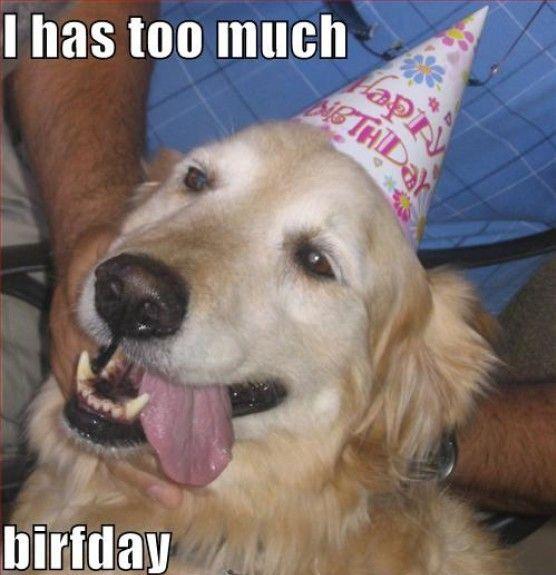 Funny Dog Meme Happy Birthday : Dog birthday meme funny happy